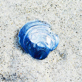 Sharon Cummings - Blue Seashell By Sharon Cummings