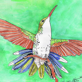 Dwayne Hamilton - Blue Tail Humming Bird