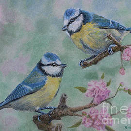 Elaine Jones - Blue Tits and Cherry Blossom