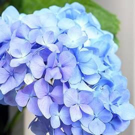 Terri Winkler - Blue Virginia 1545