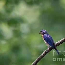 Andrea Silies - Bluebird
