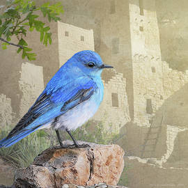 R christopher Vest - Bluebird At The Cliff Palace