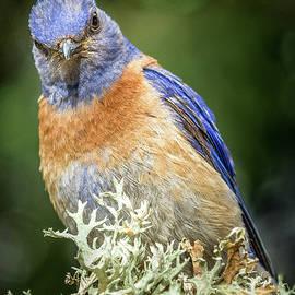 Jean Noren - Bluebird Attitude