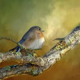 Bluebird Contemplation by Bellesouth Studio
