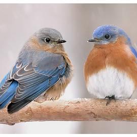 Bluebird Love by Jack Nevitt