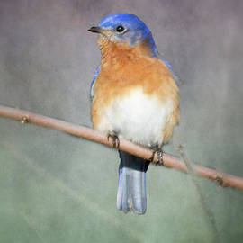 Bluebird of Happiness by Michelle Tinger