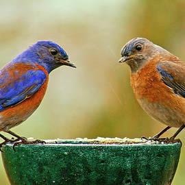 Jean Noren - Bluebird Pair