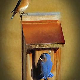 Sue Melvin - Bluebird Parents