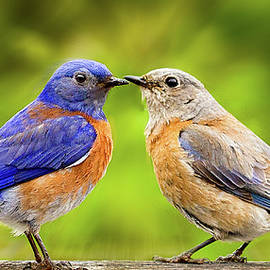 Jean Noren - Bluebird Romance
