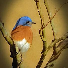 Sue Melvin - Bluebird Waiting For Spring
