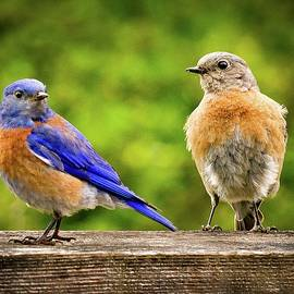 Jean Noren - Bluebirds