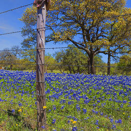 Stephen Stookey - Bluebonnet Boot Post