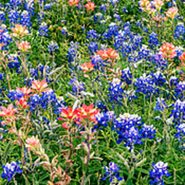 Bluebonnets and Paintbrushes Panorama - Texas by Brian Harig