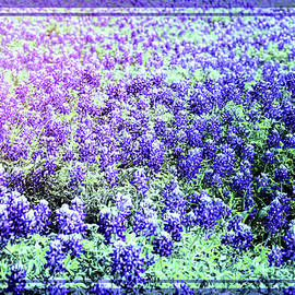 Bluebonnets With Blue Border by Judy Vincent