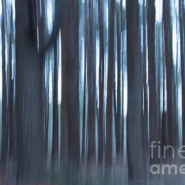 Blues In The Forest by Sharon Mayhak