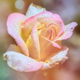 Blushing Bloom ... by Judy Foote-Belleci