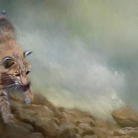 Jai Johnson - Bobcat On The Rocks