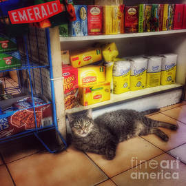 Miriam Danar - Bodega Cat - At Home in New York