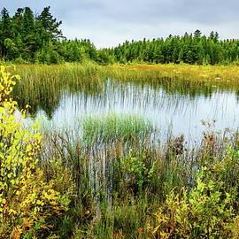 Alexey Stiop - Bog in Northern Michigan