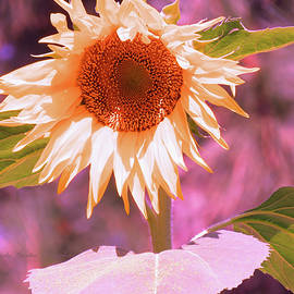 Super Star Sunflower - Sunflower Art from the Garden - Floral Photography by Brooks Garten Hauschild