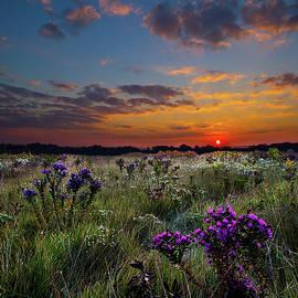 Bonnie's Meadow by Phil Koch