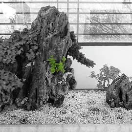 YiShan - Bonsai #3