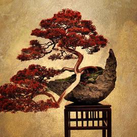 Bonsai  by Jessica Jenney