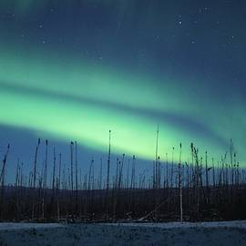 David Broome - Boreal Match Stick Aurora