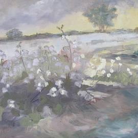 Susan Richardson - Boston Cotton Fields