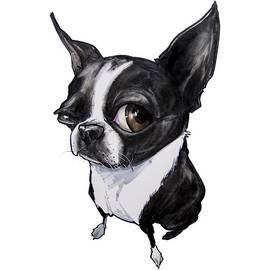 Boston Terrier - John LaFree