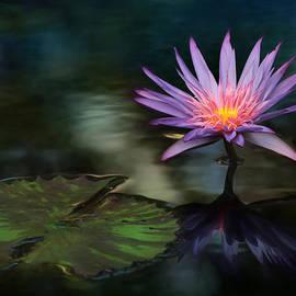 Botanical Reflections