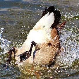 Cynthia Guinn - Bottom Up Splash