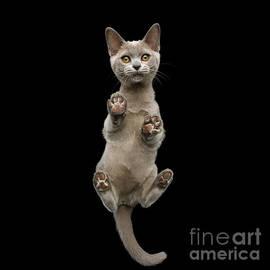 Bottom view of Kitten by Sergey Taran