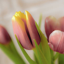 Bouquet of pink tulips by Anna Matveeva