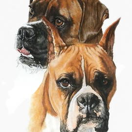 Boxers in Watercolor by Barbara Keith