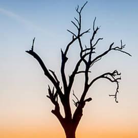 Branches by Az Jackson