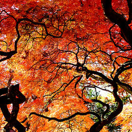 Colleen Kammerer - Branching Out - Japanese Red Maple
