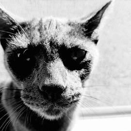 Breaking Bad Kitty by Beverly Elliott
