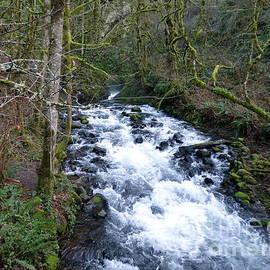 Bridal Veil Creek Below The Falls by Charles Robinson