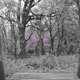 Bridge To Beauty by Dylan Punke