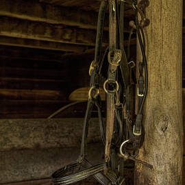 Bridle by Louise Reeves
