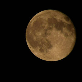 Pat Turner - Bright Moon