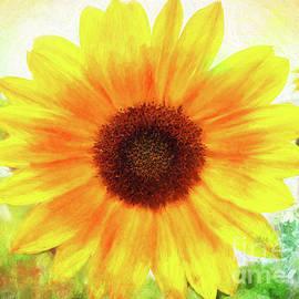 Anita Pollak - Bright Yellow Sunflower - Painted Summer Sunshine