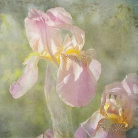Toni Hopper - Brightness of the Day Iris