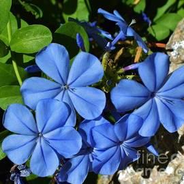 Janet Marie - Brilliant Blue Blooms