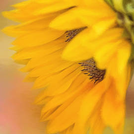 Jordan Blackstone - Bring Sunshine - Sunflower Art