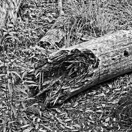 Broken Tree by Maggy Marsh