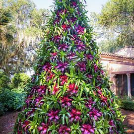Liesl Walsh - Bromeliad Christmas Tree at Pinewood Estate, Bok Tower