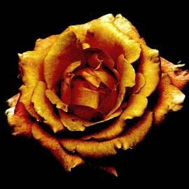 Angela Davies - Bronzed Rose