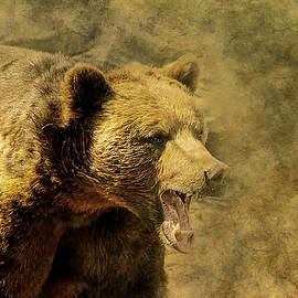 ractapopulous - brown bear